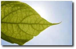 Cosmétique et écologie